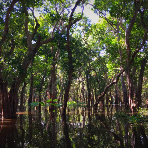 En pirogue dans la mangrove