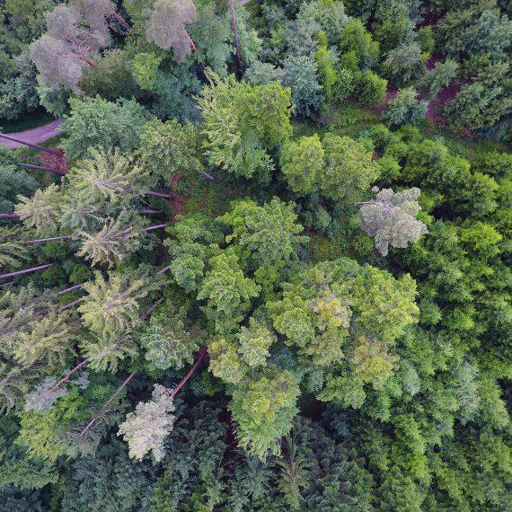 Forêt bernoise